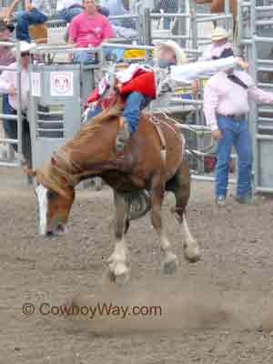 Rodeo.BarebackBroncRiding