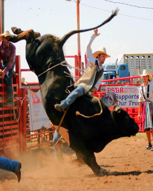 rodeo.bull.riding