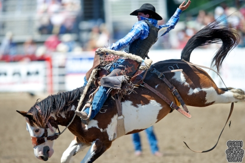 rodeo.saddle.bronc