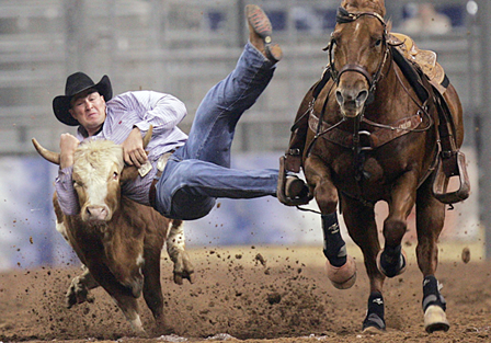rodeo.steer.wrestling
