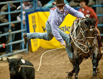 rodeo.tie-down-roping