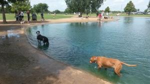Dog.park.1