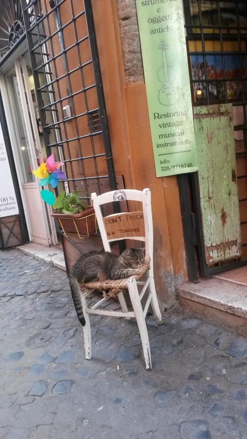 Rome.pisica.1