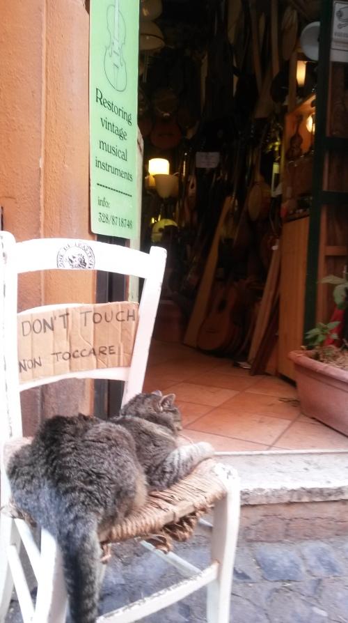 Rome.pisica.2