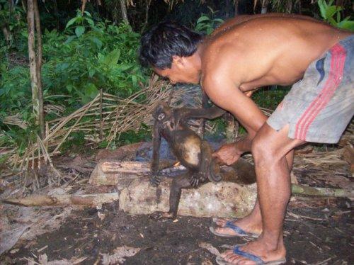amazon-maimuta